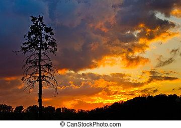дерево, небо, сосна, красочный