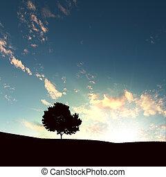 дерево, одинокий, закат солнца