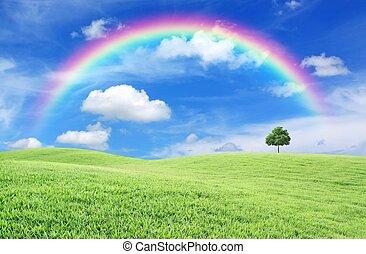 дерево, радуга, зеленый, поле, одинокий