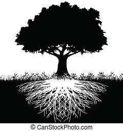 дерево, силуэт, roots