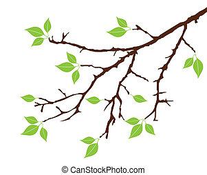 дерево, филиал