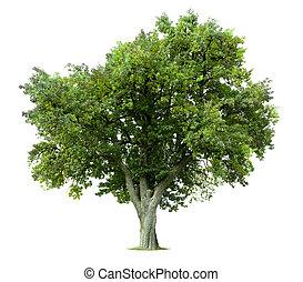 дерево, isolated, яблоко