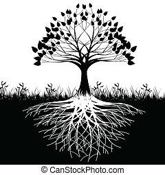 дерево, roots, силуэт