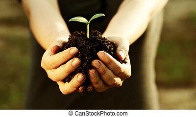 держа, растение, молодой, женский пол, рука
