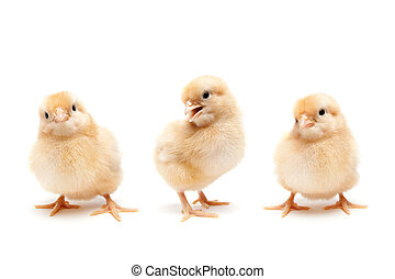детка, милый, chickens, три, chicks