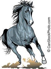дикий, лошадь, черный