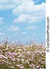 дикий, поле, космос, цветы