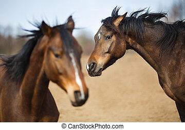 дикий, horses