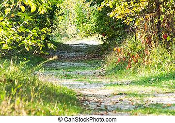 дорога, через, лес, trees