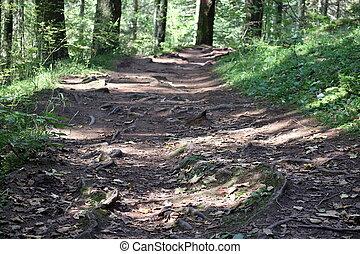 дорожка, посмотреть, roots, дерево, лес