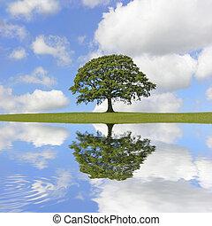 дуб, дерево, красота
