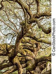 дуб, жить, ветви, snaking, дерево