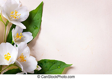жасмин, бумага, весна, задний план, старый, цветы