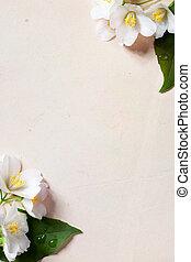 жасмин, бумага, цветы, старый, изобразительное искусство, задний план, рамка, весна