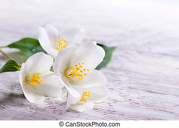 жасмин, дерево, задний план, цветок, белый