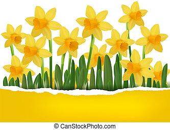 желтый, весна, цветок, задний план