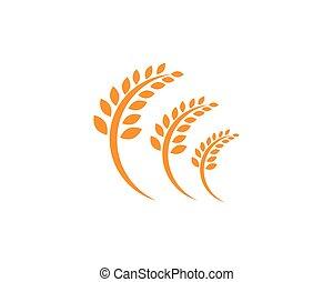 жизнь, шаблон, логотип, значок, вектор, здоровый, пшеница, сельское хозяйство