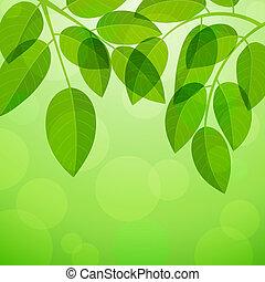 задний план, листва