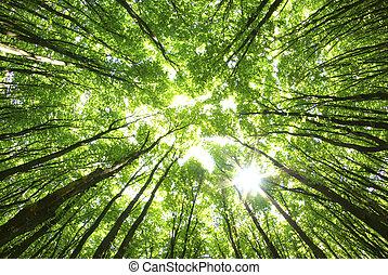 задний план, trees