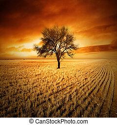 закат солнца, дерево