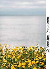 закат солнца, диего, цветы, натуральный, cliffs, парк, калифорния, желтый, точка, loma, сан -
