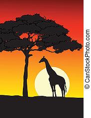 закат солнца, задний план, африканец