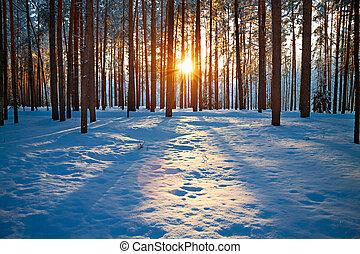 закат солнца, зима, пейзаж, лес
