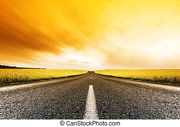 закат солнца, канолы, дорога