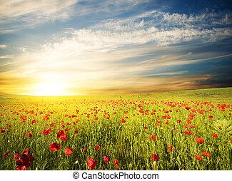 закат солнца, небо, против, poppies