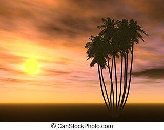 закат солнца, пальма, дерево