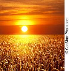 закат солнца, пейзаж