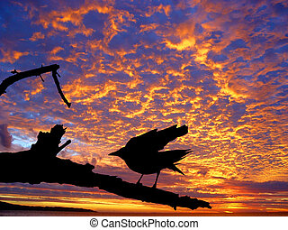 закат солнца, птица, против