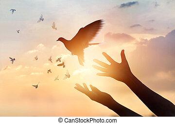 закат солнца, свободно, enjoying, задний план, природа, praying, надежда, птица, концепция, женщина