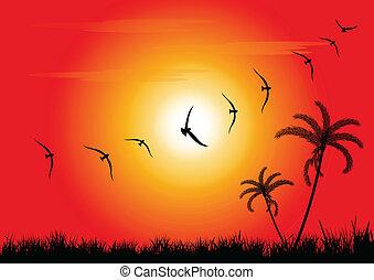 закат солнца, birds