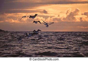 закат солнца, seagulls
