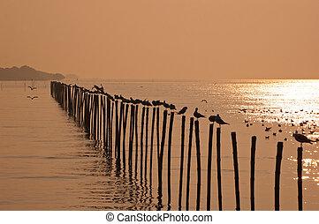 закат солнца, thailand., seagulls, море