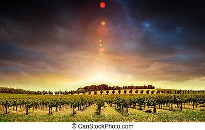 закат солнца, vines