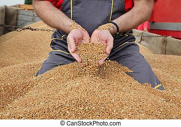 заливка, пшеница, сельское хозяйство, урожай, уборка урожая, фермер