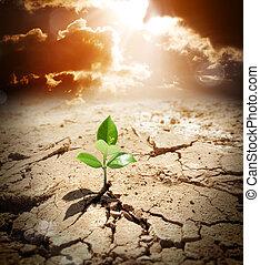 засушливый, земельные участки, согревание, климат, растение