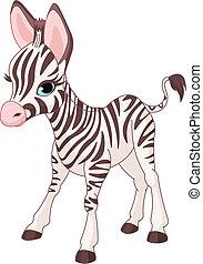 зебра, милый, жеребенок