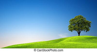 зеленый, дерево, закат солнца