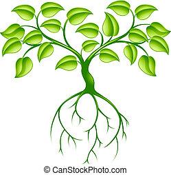 зеленый, дерево, roots