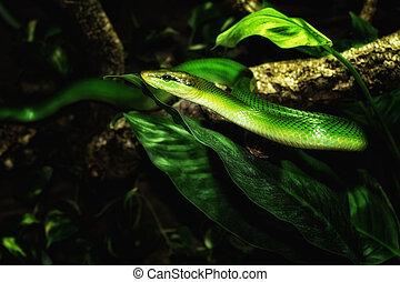 зеленый, змея