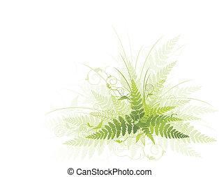 зеленый, папоротник