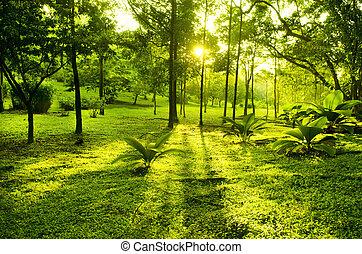зеленый, парк, trees