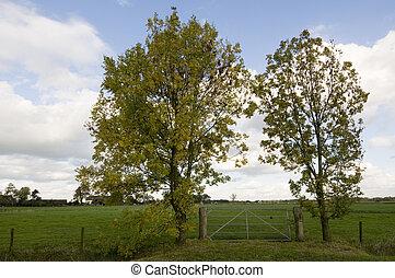 зеленый, пейзаж, trees, голландский