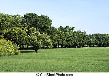 зеленый, трава, парк, trees
