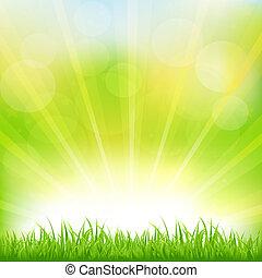 зеленый, трава, санберст, задний план