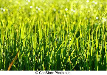 зеленый, трава, light.