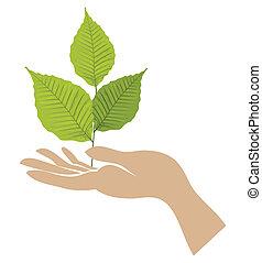 зеленый, hand., вектор, лист